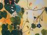 아침에 읽는 글 | 10월의 둥근잎유홍초