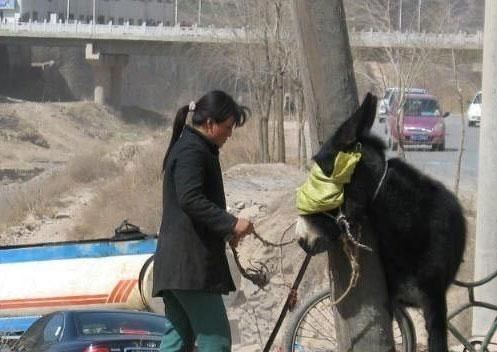 teen with donkey fucking