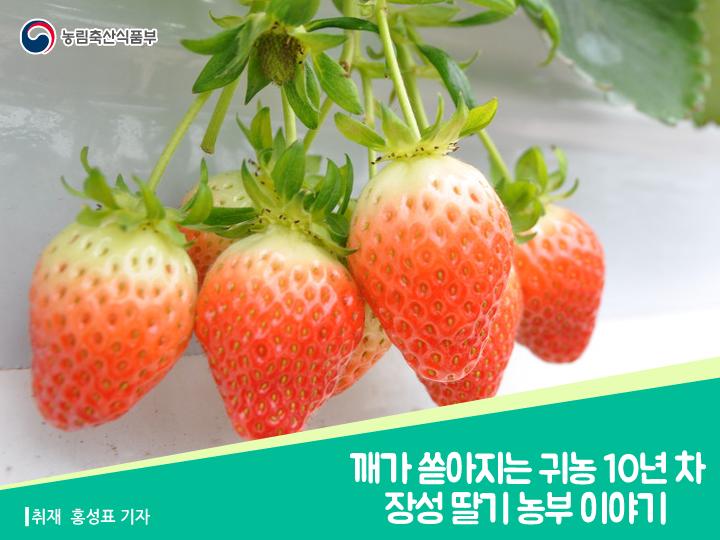 깨가 쏟아지는 귀농 10년 차 장성 딸기 농부 이야기