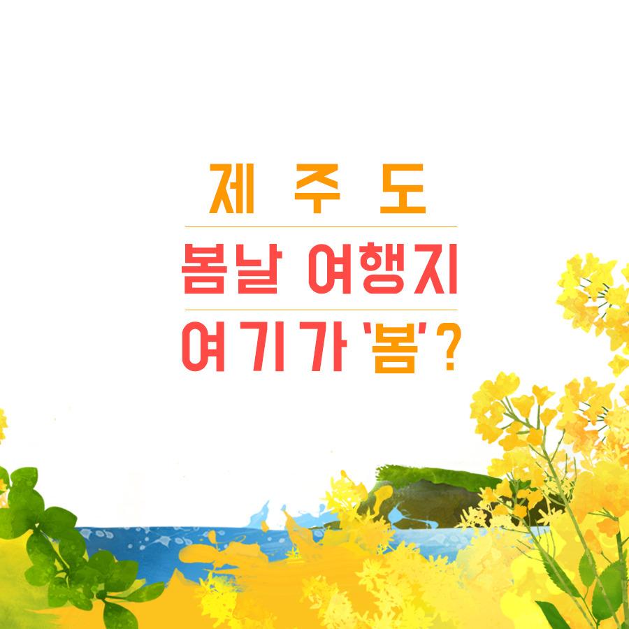 제주도 추천 봄 여행지12~ 제주도 봄 여행