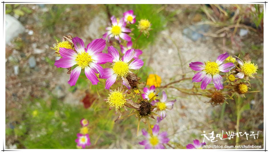 해발 800m에 피어있는 가을꽃s